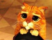 Imagen tierna del gato de sherk